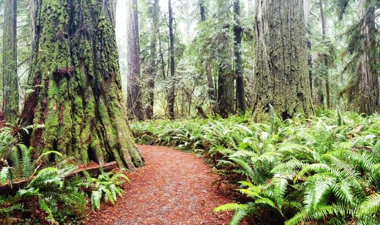 jedediah-smith-redwoods_credit-brie