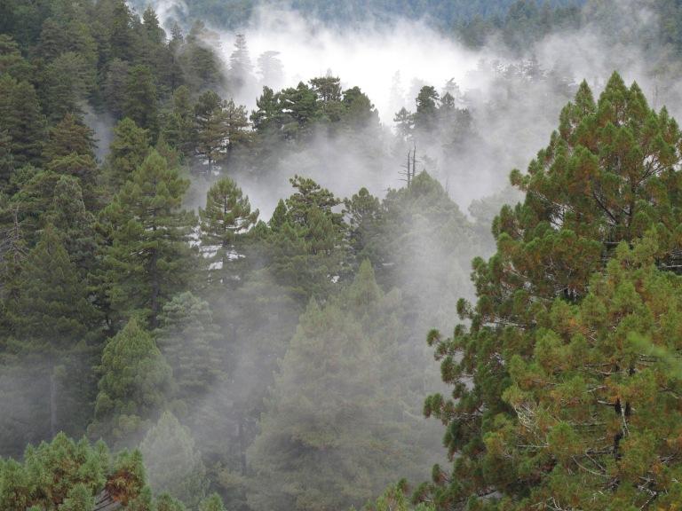 pcrsp-foggy-canopy_sillett